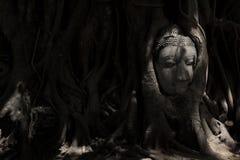 Buddha-Bildkopf fest im Baum Stockfotografie