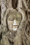 Buddha and bodhi tree Stock Photo