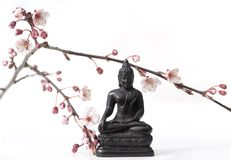 Buddha and buds. Buddha with flowering cherry-branch, on white Stock Photography
