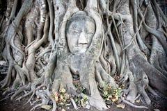 Buddha de Ayutthaya Fotografia de Stock