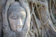 Buddha in den Baumwurzeln bei Wat Maha That Lizenzfreies Stockbild
