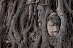 Buddha dirige la statua bloccata nelle radici dell'albero di Bodhi a Wat Mahathat, parco storico di Ayutthaya, Tailandia fotografie stock