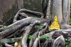 Buddha dorato sulle radici dell'albero sopraffa le pareti del tempio antico Fotografia Stock Libera da Diritti