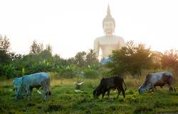Buddha Dziki Fotografia Stock