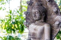 Buddha ed il serpente Fotografia Stock Libera da Diritti