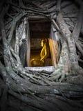 Buddha en el árbol Fotos de archivo libres de regalías