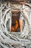 Buddha-Entlüftungsöffnungs-Feld-Wurzel-Wand Lizenzfreies Stockbild