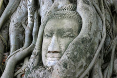 Buddha Face. Sandstone Buddha's head embraced by Boddhi tree roots in the Ancient Thai capital - Ayutthaya Stock Photos
