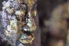 Buddha face covered with gold leaf