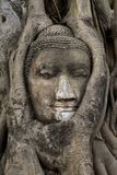 Buddha Face entangled in branches (Wat Mahathat - stock images