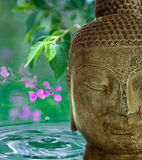 Buddha. Face with green leaves, flowers and water in the background Stock Photo
