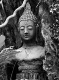 Buddha face head stucco in black and white Stock Photo