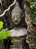 Buddha face head stucco covered by tree Royalty Free Stock Photos