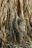 Buddha face in root at Wat Mahathat,Ayutthaya Stock Photo
