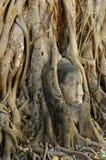 Buddha face in root at Wat Mahathat,Ayutthaya Stock Photo