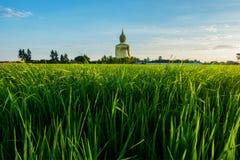 Buddha among the field. Buddha among rice field Royalty Free Stock Images