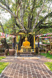 Buddha with the first bodhi tree Wat Sri Maha Pot, Thailand Stock Image