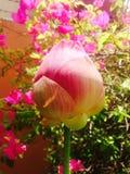 Buddha flower Royalty Free Stock Photo