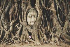 Buddha głowa przy Ayuttaya obraz royalty free