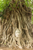 Buddha głowa w Bo drzewa korzeniu (UNESCO światowe dziedzictwo) obrazy stock