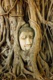 Buddha głowa w Drzewnych korzeniach, Wat Mahathat, Ayutthaya fotografia stock