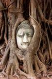 Buddha g?owy rze?ba ?apa? w pu?apk? w korzeniach wielki drzewo przy Watem Mahathat Ayutthaya Dziejowy Parkowy Tajlandia zdjęcie royalty free