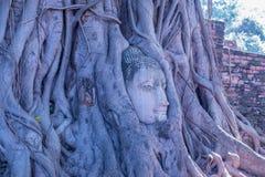 Buddha głowa Zdjęcia Stock