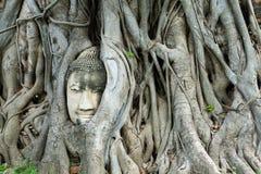 Buddha głowa trzyma dalej drzewnych korzenie zdjęcie royalty free