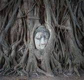 Buddha głowa w drzewie zakorzenia przy Watem Mahathat, Ayutthaya, Tajlandia Fotografia Royalty Free