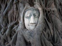 Buddha głowa w drzewie zakorzenia przy Watem Mahathat, Ayutthaya, Tajlandia Zdjęcia Royalty Free