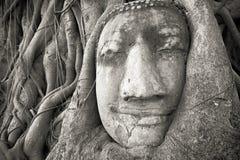 Buddha głowa w drzewie zakorzenia przy Watem Mahathat, Ayutthaya, Tajlandia Obrazy Stock