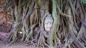 Buddha głowa w drzewnych korzeniach Obrazy Royalty Free
