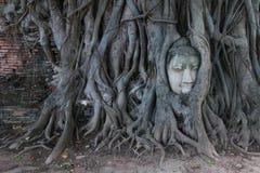 Buddha głowa w Drzewnych korzeniach, Wat Mahathat, Ayutthaya Obraz Stock
