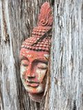 Buddha goddess in a tree Stock Image
