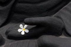 Buddha hands with flower Royalty Free Stock Images