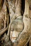 Buddha-Haupt überwältigt durch die Baumwurzeln stockfotografie
