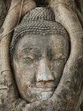 Buddha head Royalty Free Stock Photography