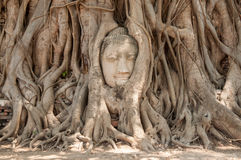 Buddha head Royalty Free Stock Photos
