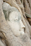 Buddha  Head Ayuthaya. Stone Buddha head in tree roots Ayuthaya Historical Park Thaialnd Stock Photos