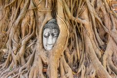 Buddha head at Ayuthaya Stock Photo