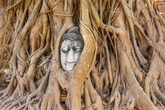 Buddha head at Ayuthaya Stock Photo