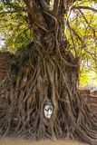 Buddha head at Ayuthaya Stock Images