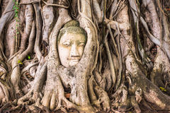 Buddha Head of Ayutthaya Stock Photos