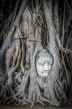 Buddha head in Ayutthaya. Buddha head in tree root in Mahathat temple of Ayutthaya, Thailand Stock Photography