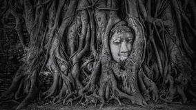 Buddha head in Ayutthaya Royalty Free Stock Images