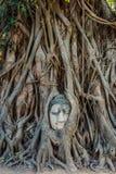 Buddha Head banyan tree Wat Mahathat Ayutthaya bangkok Thailand Royalty Free Stock Photography