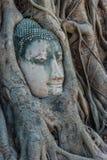 Buddha Head banyan tree Wat Mahathat Ayutthaya Stock Image
