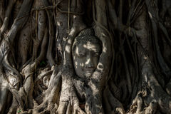 Buddha head royalty free stock photo