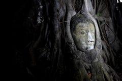 buddha head bild Royaltyfria Foton
