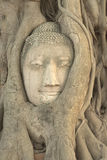 buddha head bild Royaltyfri Bild